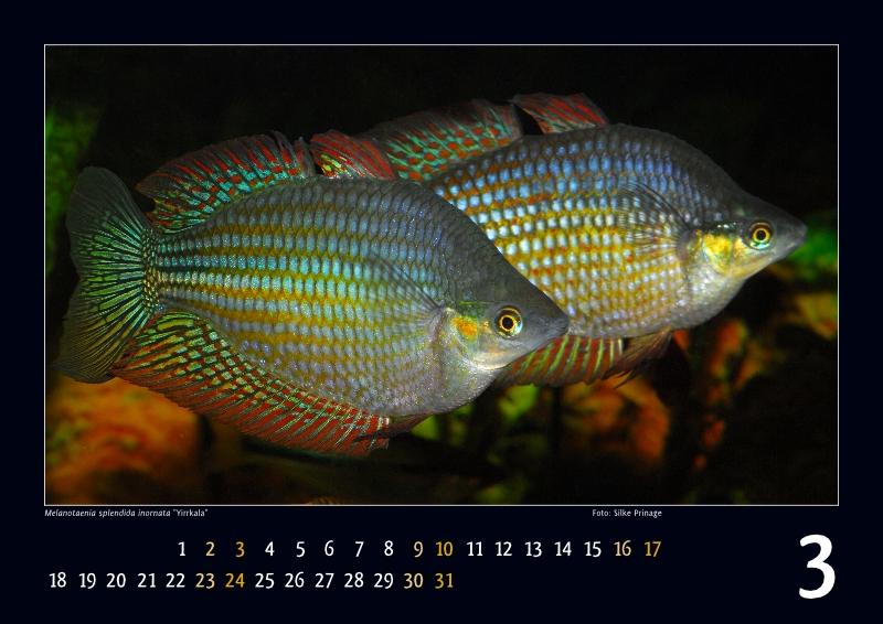 IRG-Kalender2013_03